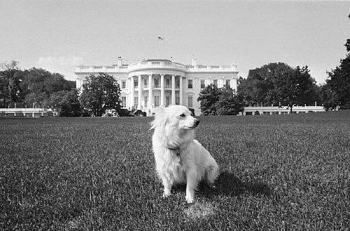 Советский лидер Никита Хрущев подарил Джону Ф. Кеннеди собаку по имени Пушинка, чья мать была одной из пассажирок искусственного спутника Земли «Спутник-5». Впоследствии Пушинка принесла четверых щенят, которых Кеннеди назвал «папниками», по всей вероятности, составив это слово из «паппи» (puppy – щенок, англ.) и «спутник».