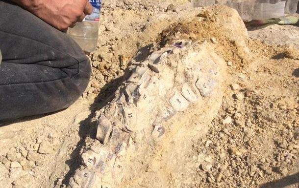 Останки кита возрастом десять миллионов лет нашли в Крыму