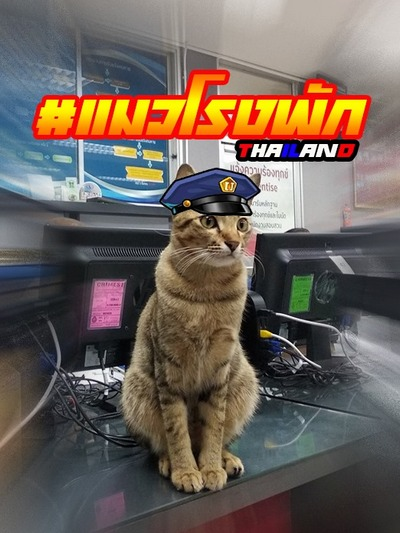 Полицейские приняли на «работу» кота