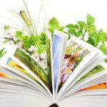 Программа «А у нас в библиотеке книжки разные живут!»