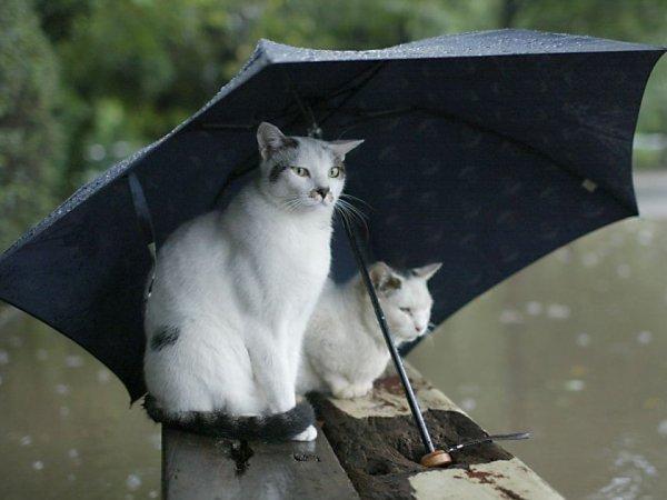 Синоптики об аномальных холодах и дождях