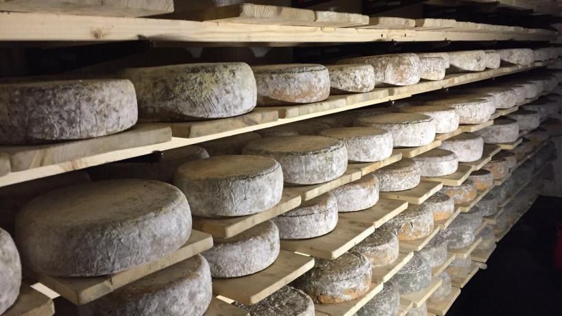 «Сырная долина» в Подмосковье: как новый кластер сделает регион лидером сыроварения