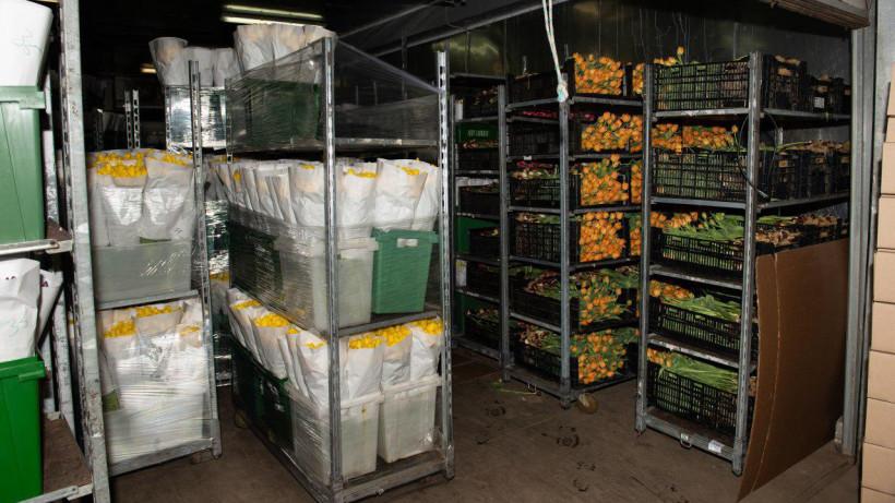 Тепличные комплексы Подмосковья поставят в магазины более 3 млн цветов к 1 сентября