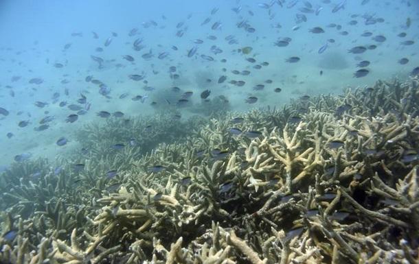 Ухудшился прогноз для Большого Барьерного рифа