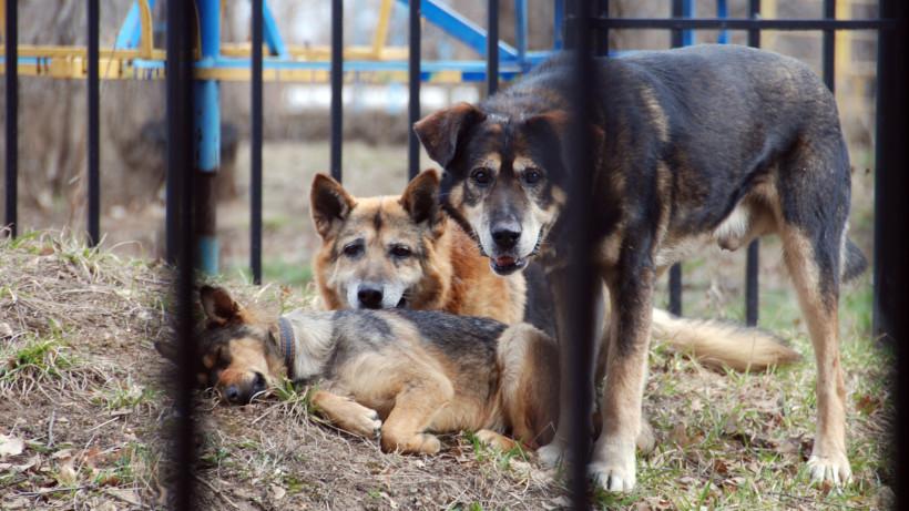 В деревне Ступина отменили карантин по бешенству животных