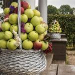 «В саду срывает осень яблоки…»