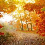 Вечер-чествование «Лес и мы»