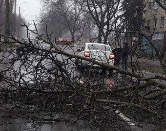 Водитель чудом ускользнул из-под падающего дерева