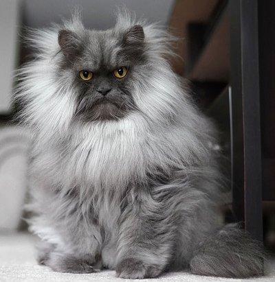 Злой кот стал новой интернет-звездой