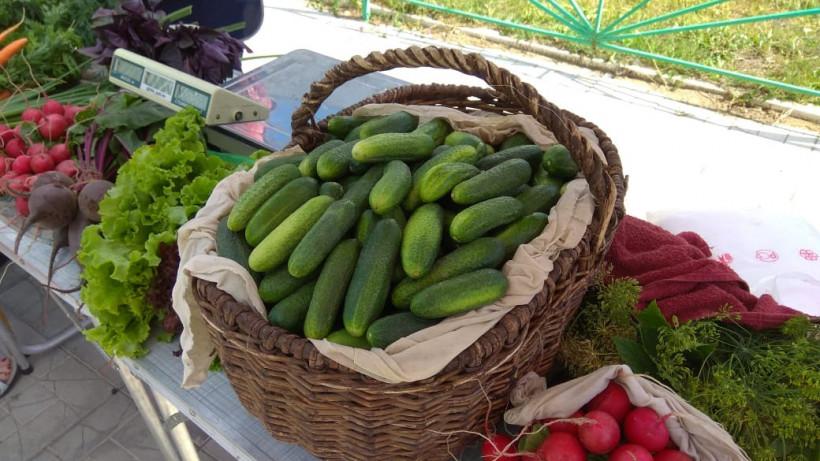 Более 1 тонны овощей и фруктов продали в Реутове на ярмарке «Ценопад»