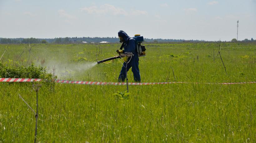 Более 26,6 тыс. га сельхозземель Подмосковья повторно проверят в рамках борьбы с борщевиком