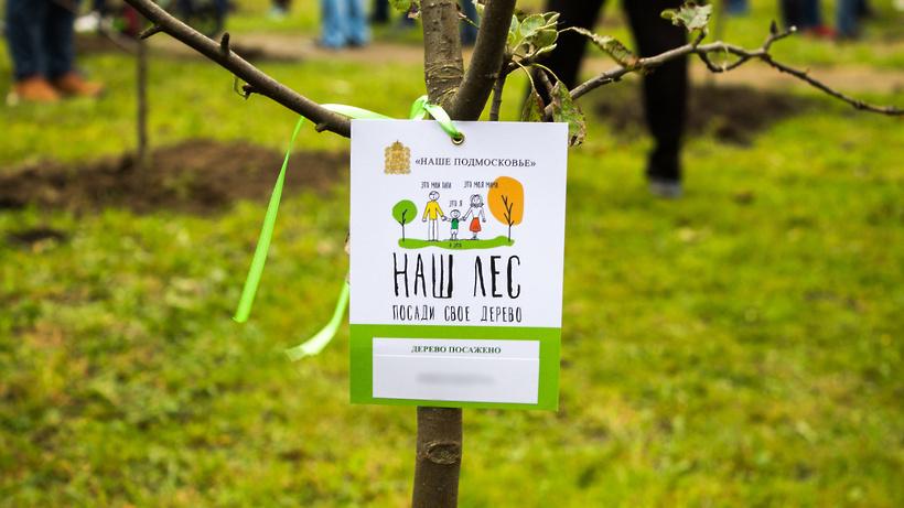 Губернатор поблагодарил жителей Подмосковья за участие в акции «Наш лес. Посади свое дерево»