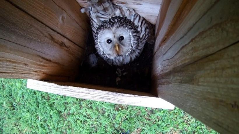 Искусственные гнездовья для редких птиц установят в трех округах Подмосковья