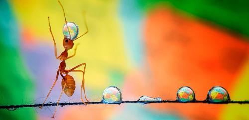 Муравей, уравновешивающий Землю. (Фото Anadgphotography):