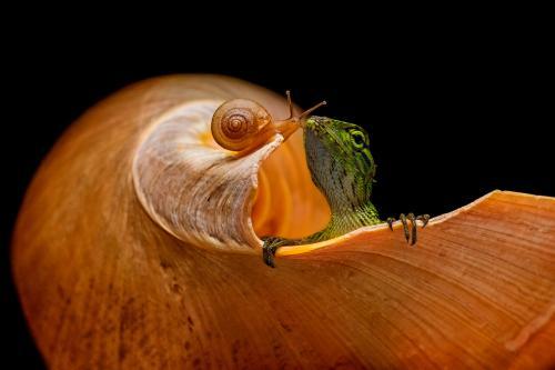 Ящерица и улитка. (Фото andihalil):