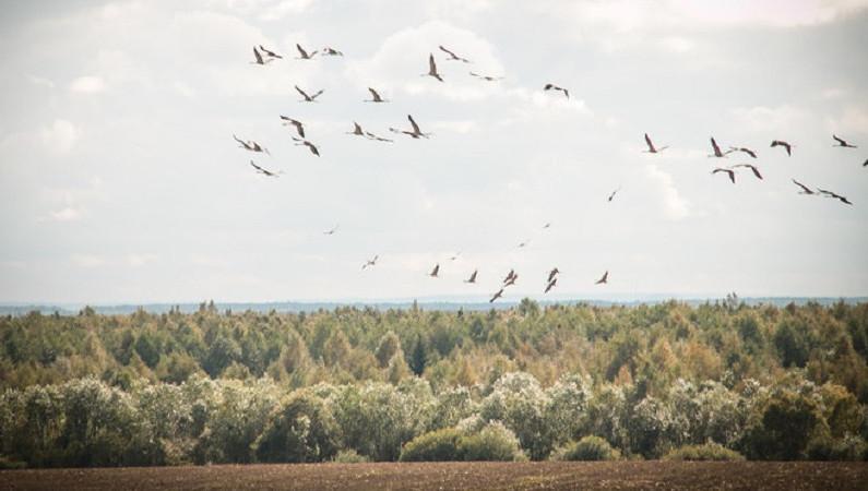 Новый природный заказник создали в Талдомском округе
