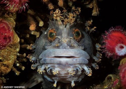 Призеры конкурса подводной фотографии