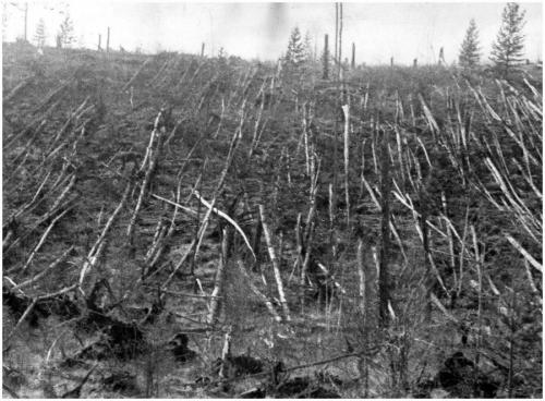 Взрыв и последовавшая затем взрывная волна были зафиксированы обсерваториями во всём мире, огромные деревья на территории 2000 км² от предполагаемого эпицентра оказались выворочены с корнем, а в домах жителей не осталось ни одного целого стекла. После взрыва началась магнитная буря, не прекращающаяся в течение пяти часов. И еще несколько дней в Сибири появлялись светящиеся серебристые облака, которые на высоте 80 км двигались к Атлантике.