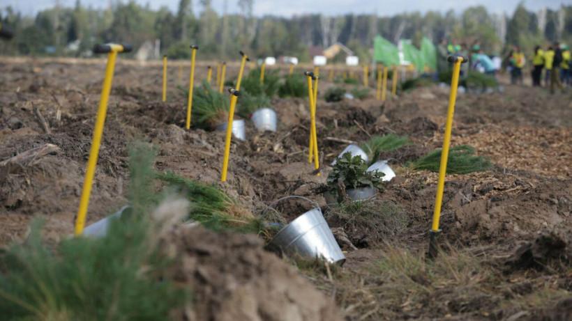 Сотрудники Минтранса Подмосковья посадили почти 100 саженцев на акции «Наш лес»