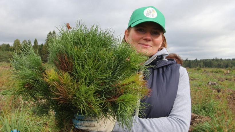 В Московской области стартовал фотоконкурс акции «Наш лес. Посади свое дерево»