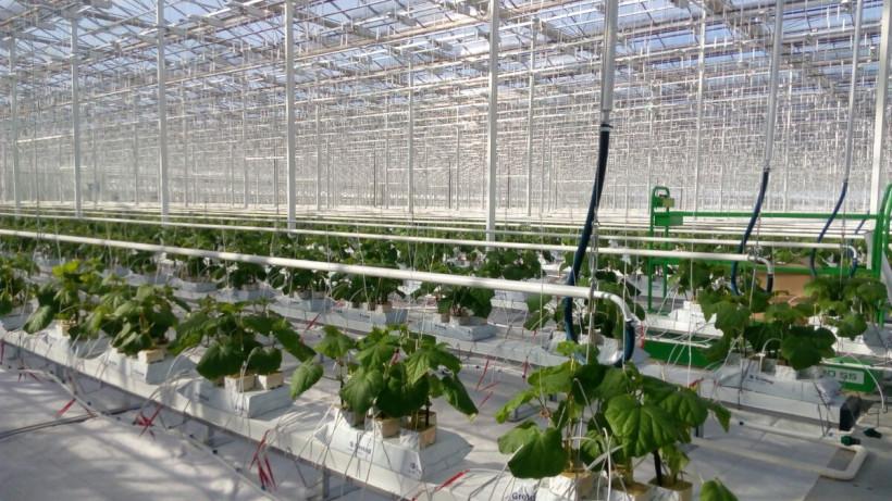 Аграрии Подмосковья собрали порядка 70 тыс. тонн овощей защищенного грунта с начала года