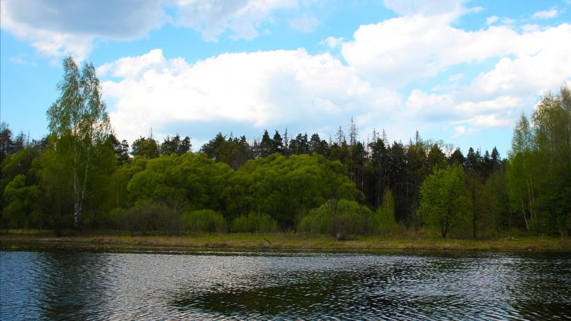 Более 200 нарушений лесного законодательства выявили за неделю в Московской области