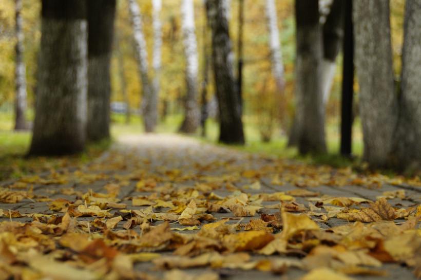 Инспекторы лесного хозяйства выявили более 100 нарушений в Подмосковье на прошлой неделе