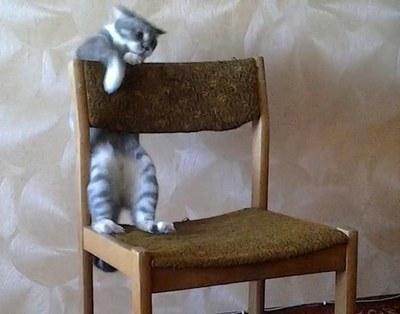 Кот-акробат поразил интернет-пользователей трюками на стуле