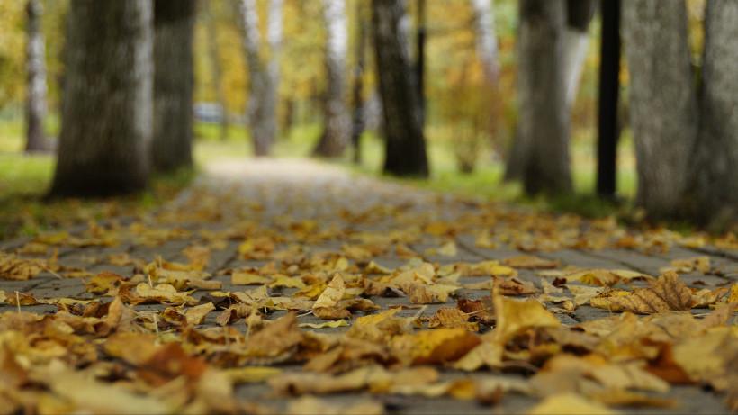 Желтые осенние листья на дорожке