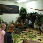 Ночь искусств в Котельничском палеонтологическом музее
