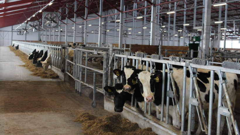 Подмосковные ветеринары проверят более 110 тыс. голов скота на туберкулез