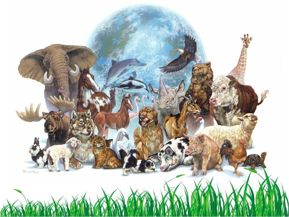 Фото всех животных из красной книги очищаете