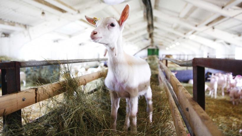 Проектирование животноводческого комплекса с сыродельней ведется в Рузском округе