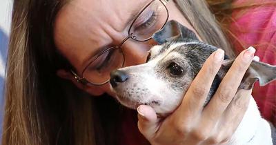 Пропавшая 12 лет назад собака воссоединилась с хозяйкой