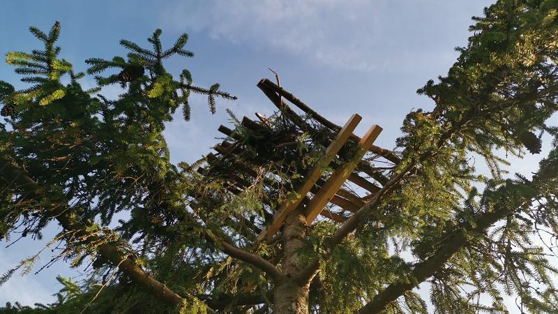 Скопа и неясыть заселили искусственные гнездовья в Подмосковье