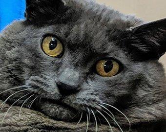 Толстая кошка на беговой дорожке стала интернет-звездой