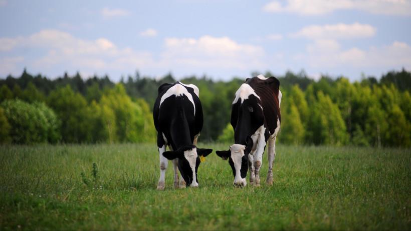 Агрохолдинг «Русское молоко» в Рузском районе