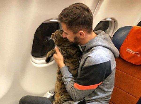 """""""Аэрофлот"""" лишил бонусных миль хозяина слишком толстого кота"""