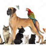Беседа-викторина«Мои домашние животные»