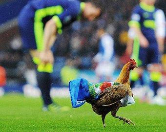 Футболист убил курицу во время матча