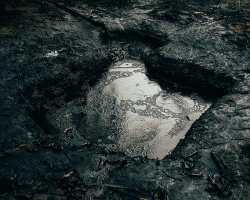 Проблемы начались с развитием нефтяной промышленности: в период с 1976-го по 2001 год произошло в общей сложности 6,8 тысячи разливов нефти в воде, в болотистой местности и на суше — всего около трех миллионов баррелей. Никаких реальных действий по очистке дельты Нигера и восстановлению экосистемы до сих пор не предпринималось.