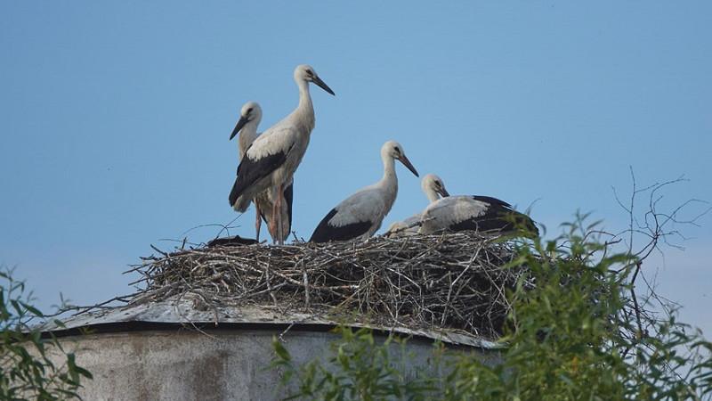 Минэкологии напомнило жителям Подмосковья о запрете подкармливать перелетных птиц