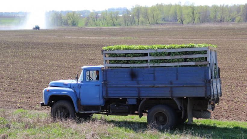 Почти 300 тыс. тонн овощей открытого грунта собрали в Подмосковье в 2019 году