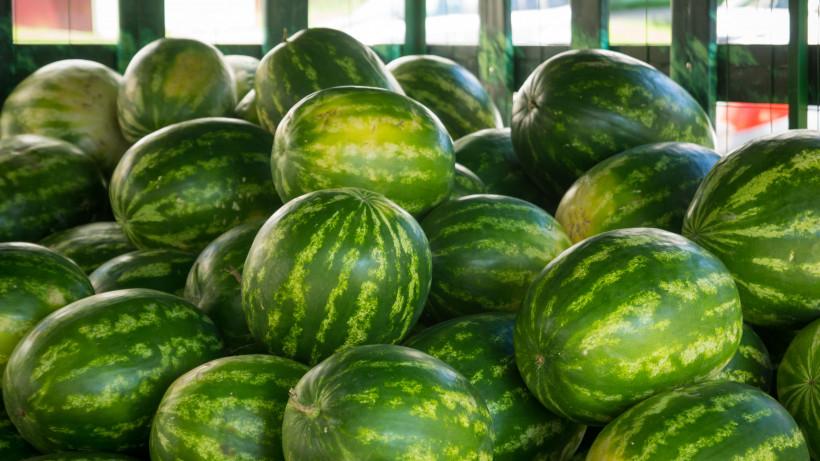Почти 6 тыс. тонн бахчевых реализовали за сезон в Подмосковье