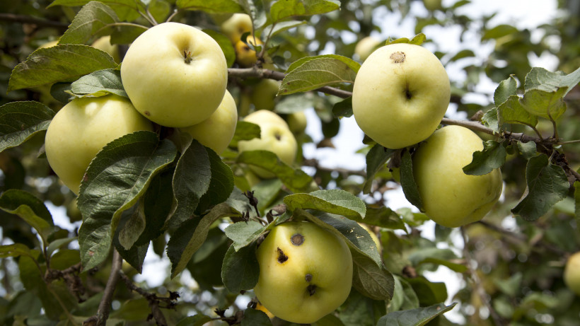 Посадку яблоневого сада завершили в лесопитомнике в Ивантеевке