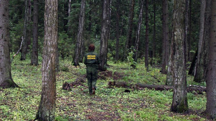 Свыше 200 нарушений лесного законодательства выявили в Подмосковье за минувшую неделю