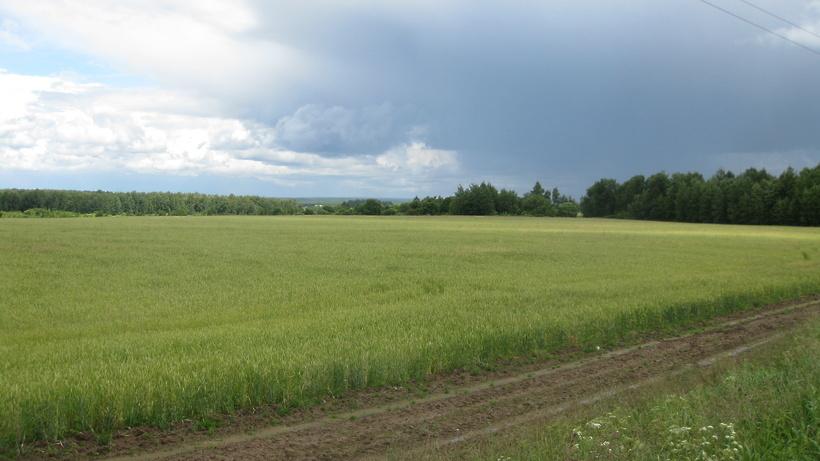 Участок земли для сельхозпроизводства сдали в аренду в Истре на 20 лет