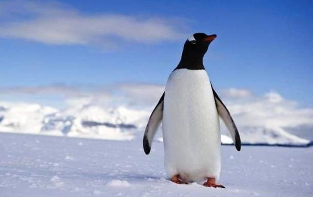 Ученые нашли гигантского окаменелого пингвина