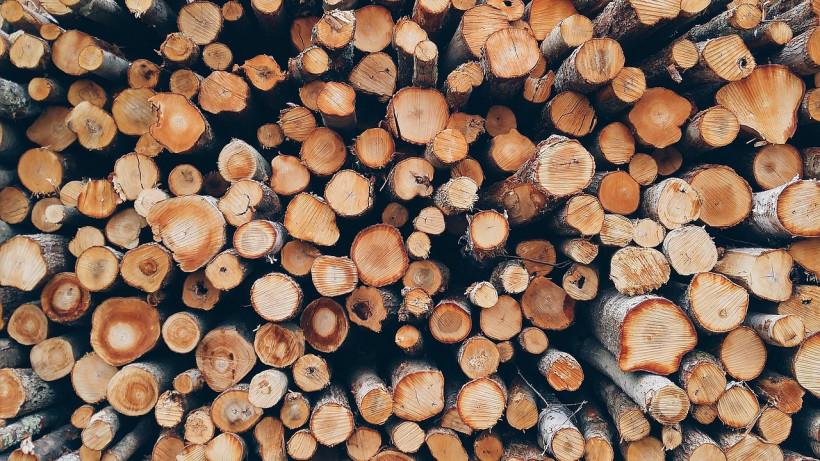 Жители Подмосковья заготовили более 5,8 тыс. кубов древесины по заявкам