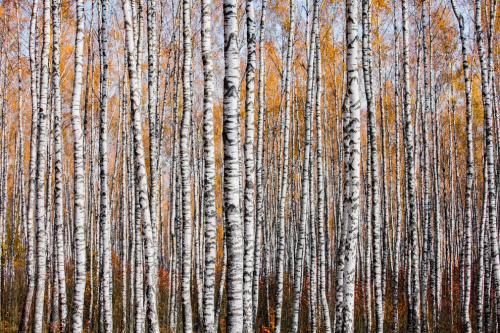 Осенний лес в Могилевской области, Беларусь. (Фото Mikhail Kapychka | 2019 British Ecological Society Photography Competition):
